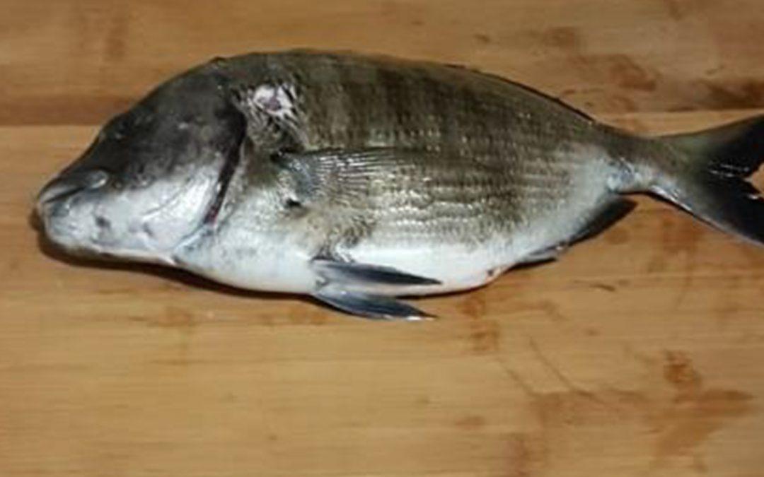 NUOVA DATA- Pescata sociale con finalità scientifiche, Civitavecchia (1 Novembre) – Progetto CAR