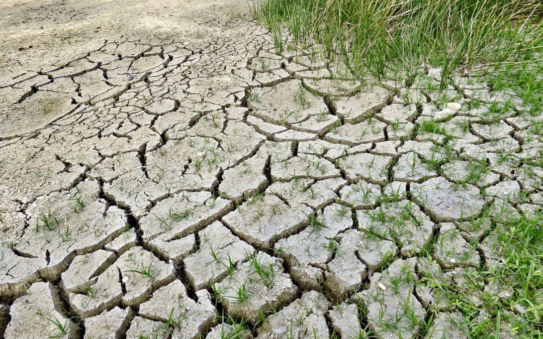 """Progetto PALMO, l'impegno del CURSA contro il """"Climate Change"""""""