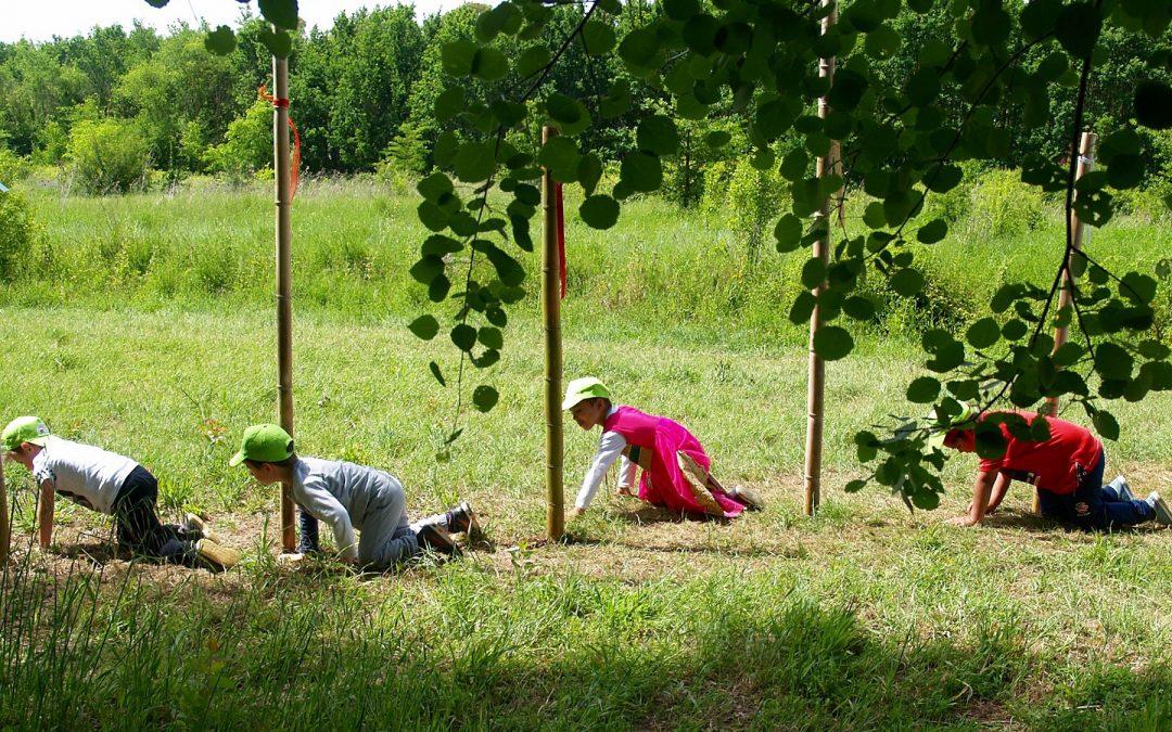 #NatureForAll: il CURSA in prima linea con il progetto NèB