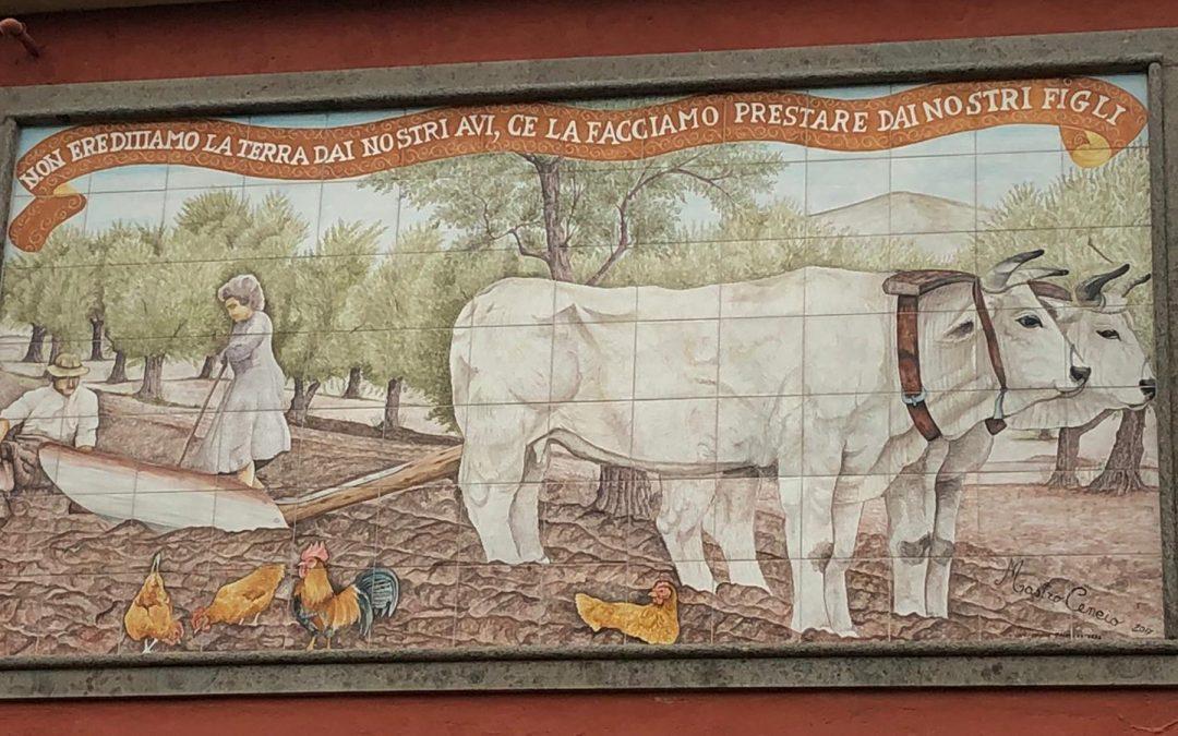 """Parte """"EcoInPascoli"""", il nuovo progetto CURSA in ambito agro-zoo-forestale"""