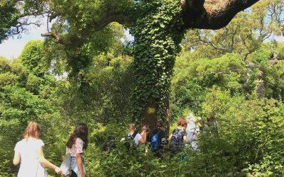 """Giornata Europea dei Parchi, CURSA: """"Per una vera transizione ecologica rilanciamo il ruolo dei parchi in Italia"""""""