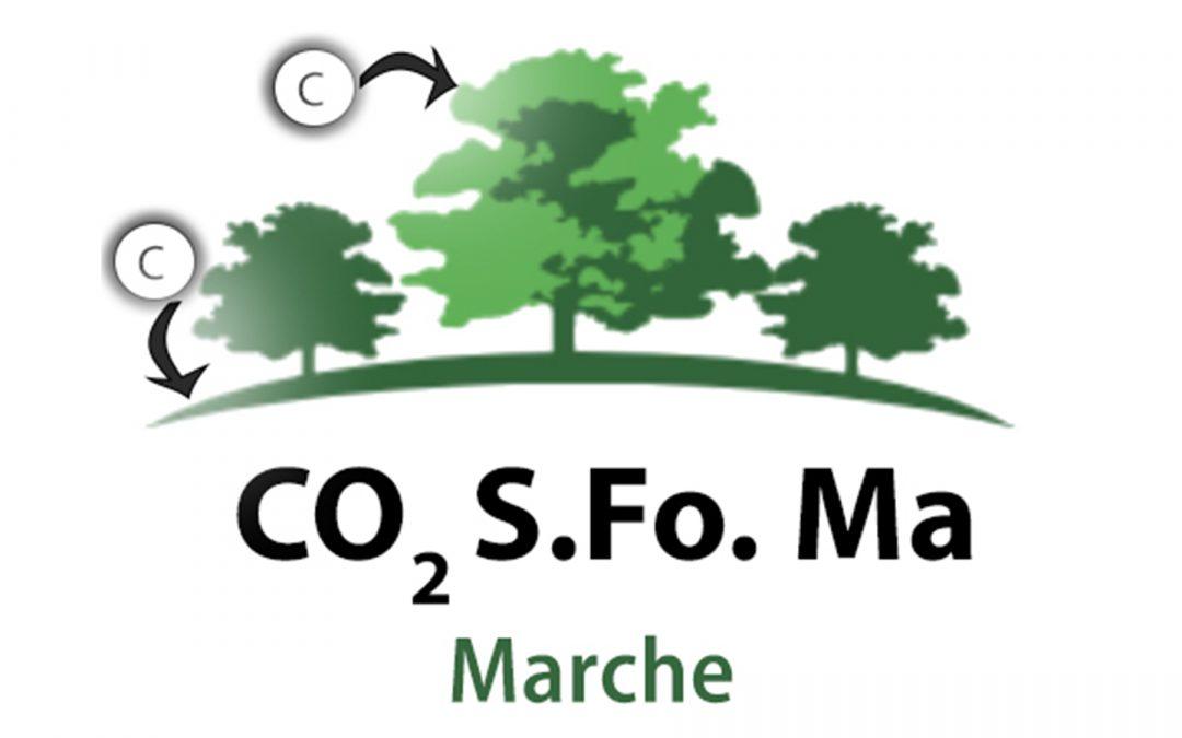 """Foreste gestite e sequestro del carbonio: fase finale per il progetto """"CO2 Stored in Forests Management MARCHE"""""""